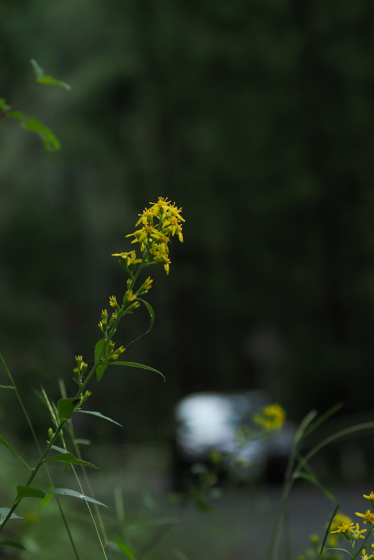 akinokirinsou005.jpg