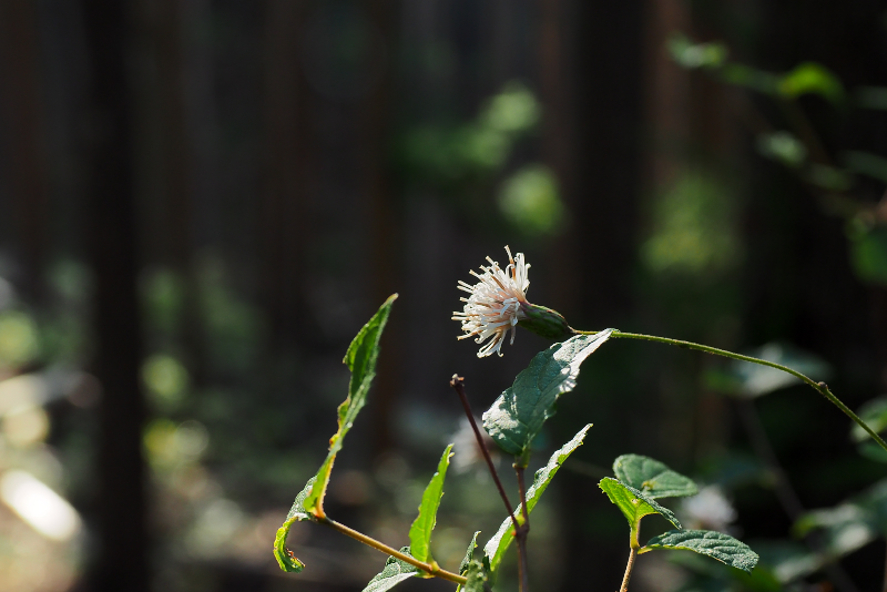 kouyabouki034.jpg