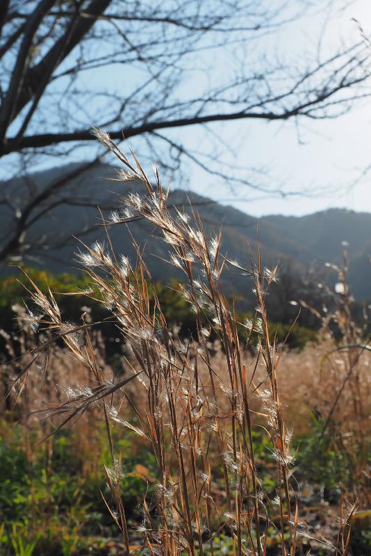 merukenkarukaya003.jpg