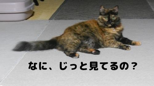 image349_New.jpg