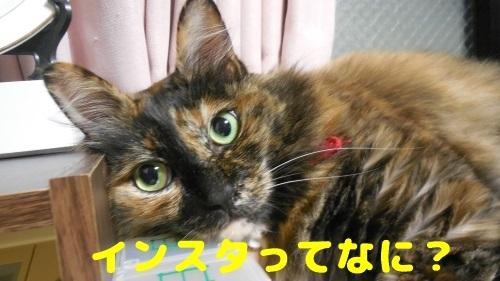 image367_New.jpg