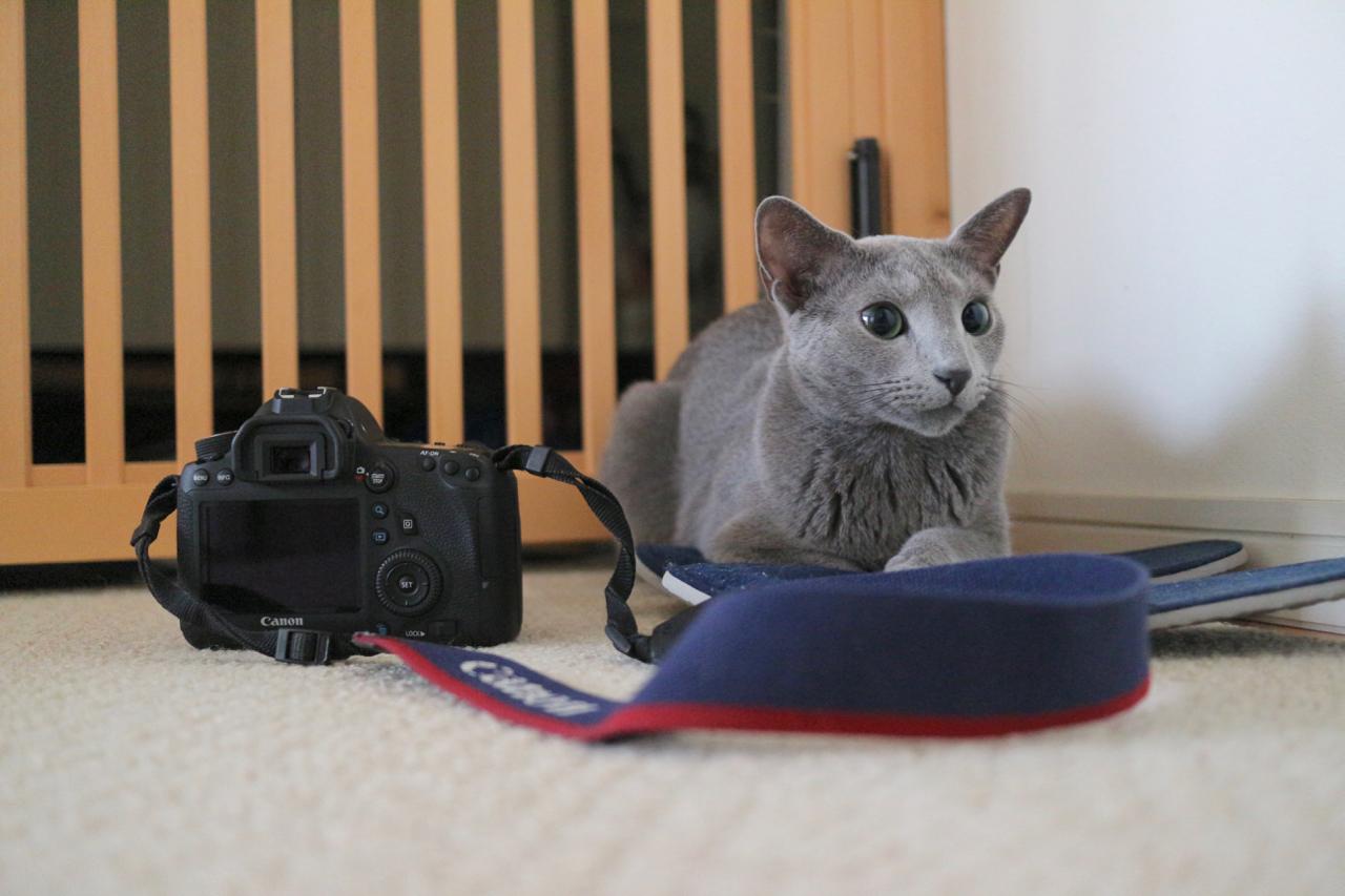 カメラとテオ