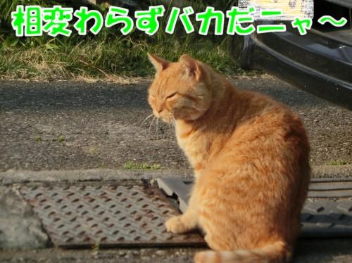201705201840328f6.jpg