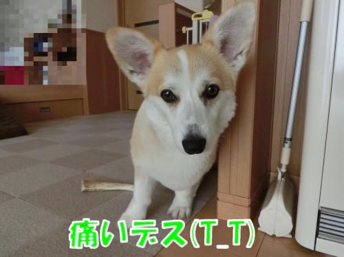 20170706184024ecf.jpg