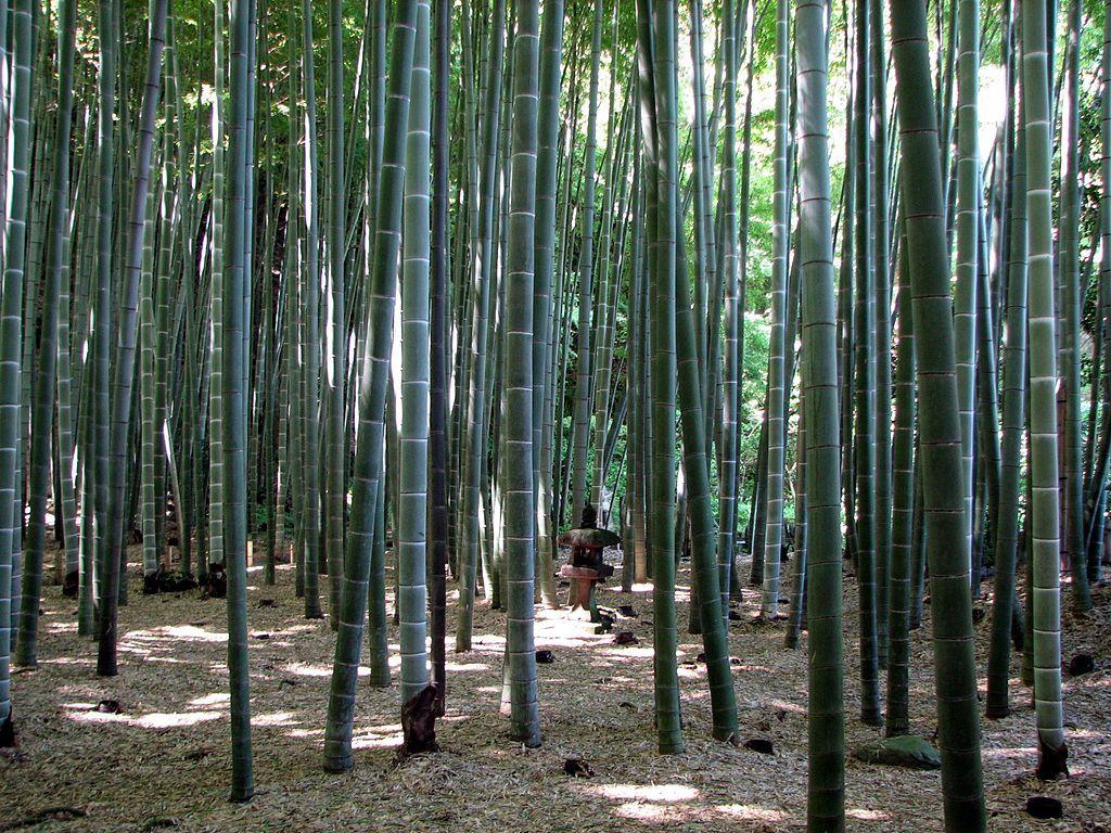 竹林と石庭_3
