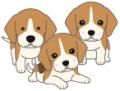 beagle3