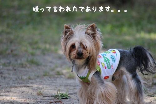 IMG_2264.jpg