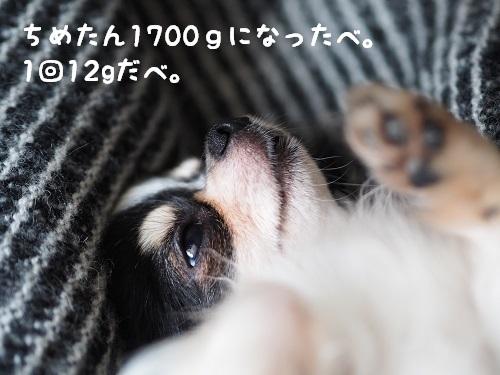 P6080006_2017060712031951a.jpg