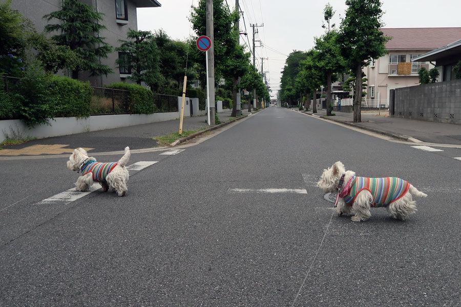 ichidotarerutonakanakamodoran4.jpg