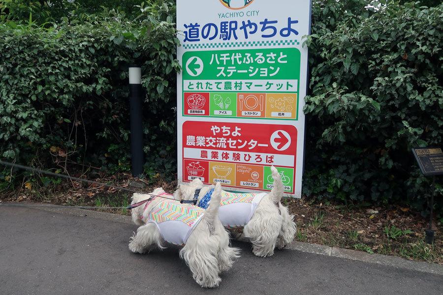 michinoekiyachiyodegelato2.jpg