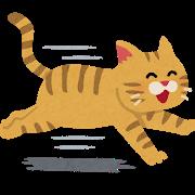 ネコ(笑顔で走る