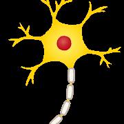 脳(ニューロン