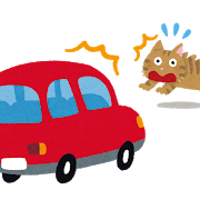自動車(猫の飛びだし