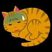 ネコ(具合が悪い?