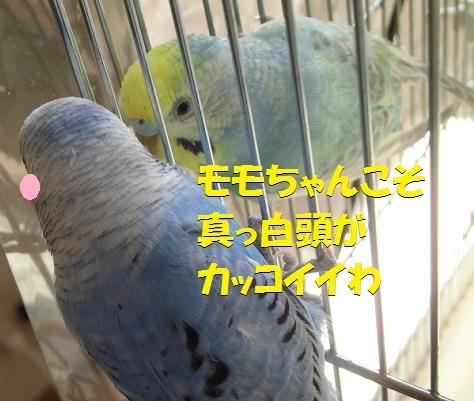 CIMG8423.jpg