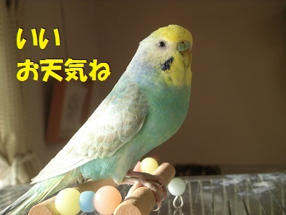CIMG8435.jpg