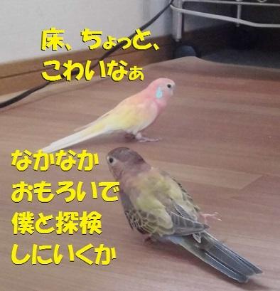 CIMG8621.jpg