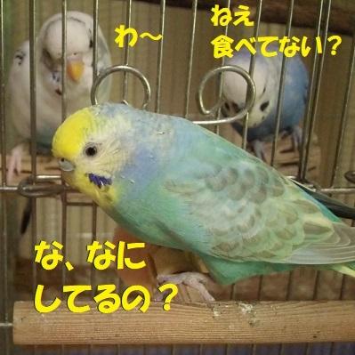 CIMG8839.jpg