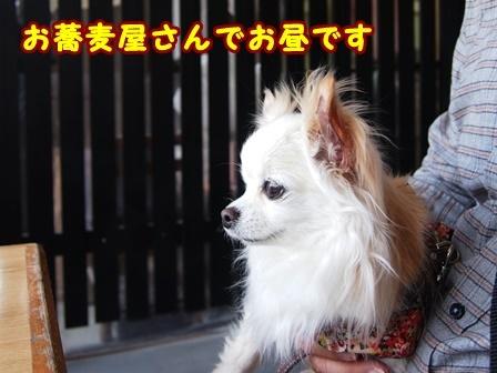 blog9447a.jpg
