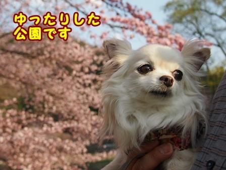 blog9481a.jpg