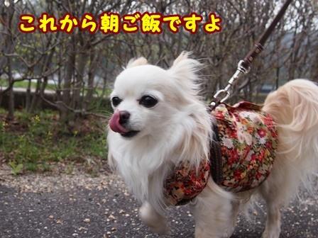 blog9501a.jpg