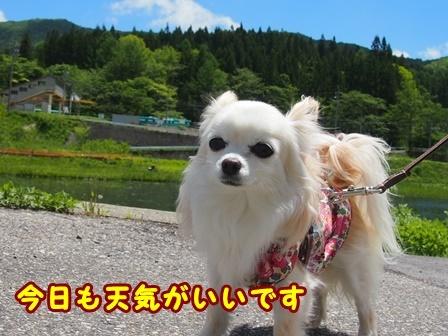blog9645a.jpg