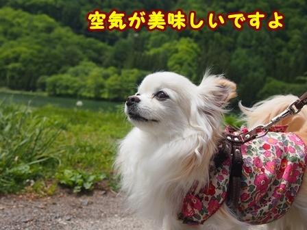 blog9665a.jpg