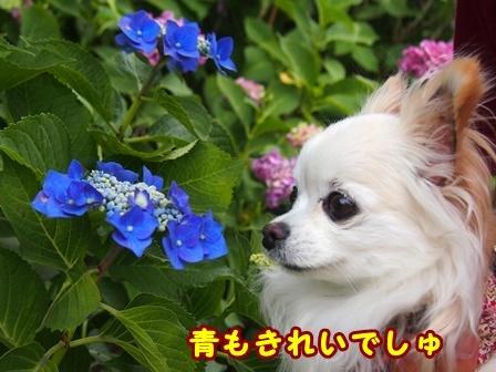 blog9702a.jpg