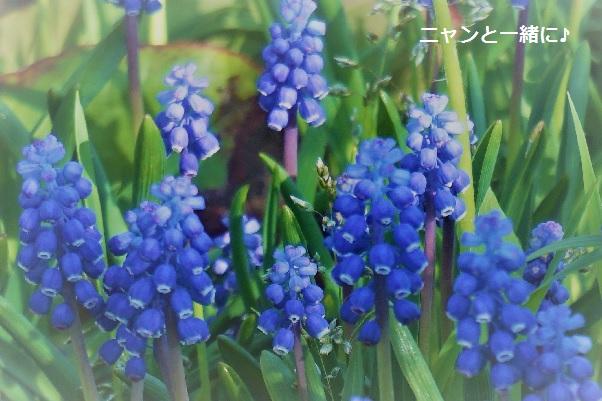 musukari2017504.jpg