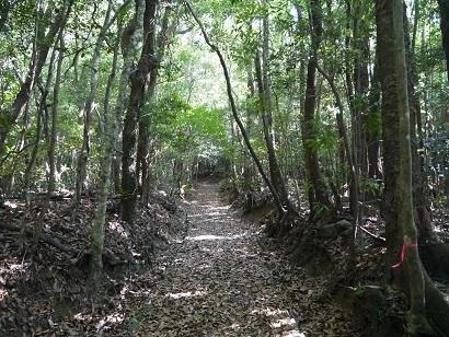 安満岳遊歩道(3)