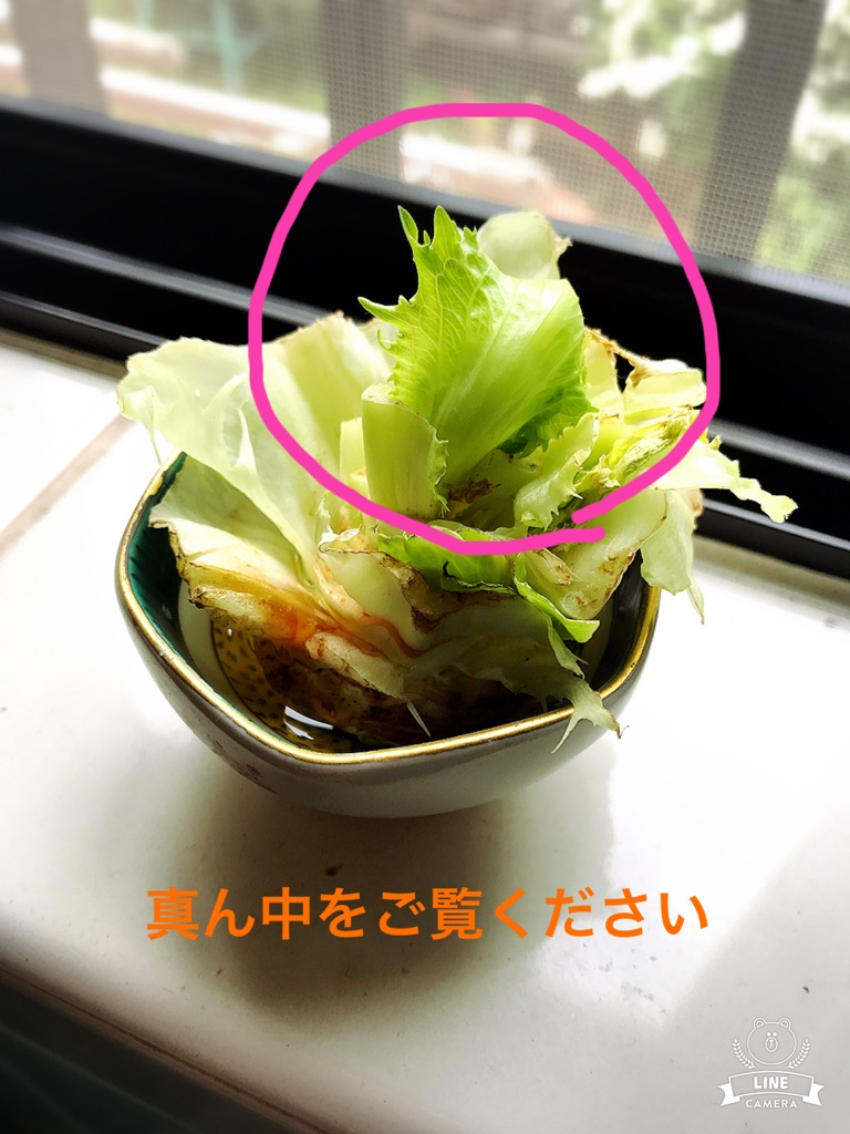 moblog_a842093c.jpg