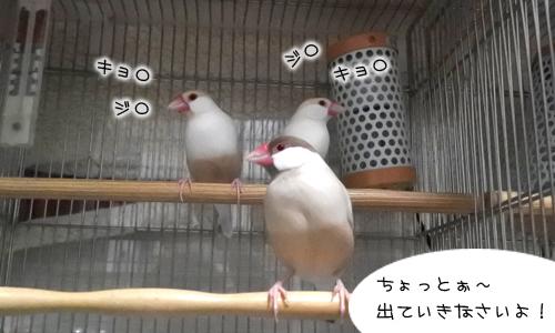 ぴのしゃんがコップにすっぽり!_3