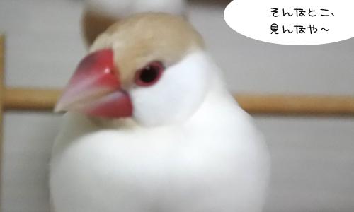 ぴのしゃんがコップにすっぽり!_4