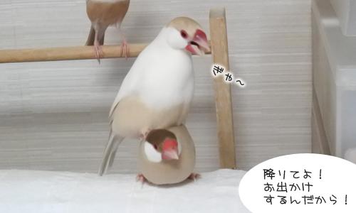 ちゃちゃ受難の日_3