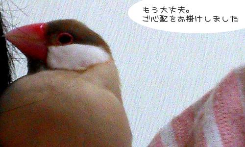 しあせな朝_2