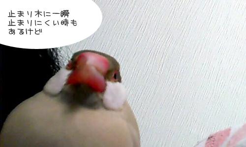 しあせな朝_1