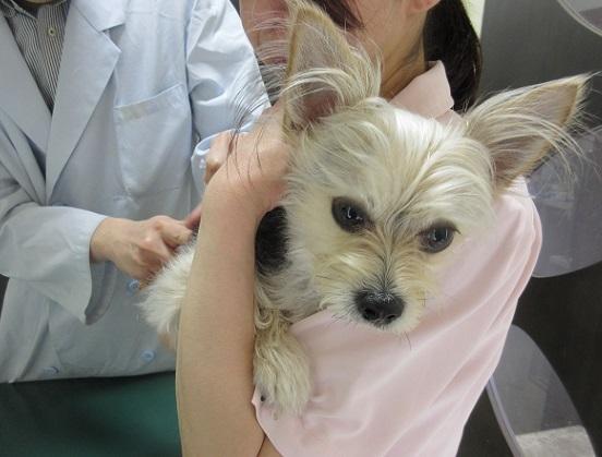 5B05S 狂犬病ワクチン 0512