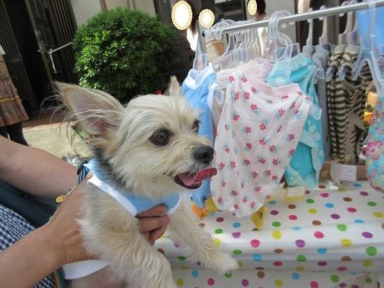 8E02S Dog Wear&Goods Shop BOO 0576