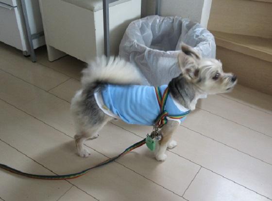 9E01 番犬 0608