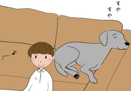 ソファで眠るラブラドール
