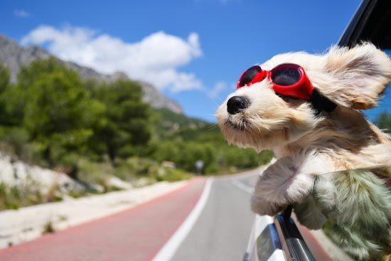 dog_car_summer.jpg