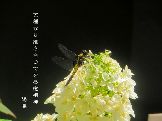 ku2873.jpg