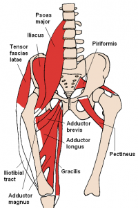 Anterior_Hip_Muscles_2_201705211006456df.png