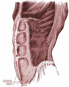 Grays_Anatomy_image392_201705061803406b8.png