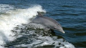 dolphin-1167996__340.jpg