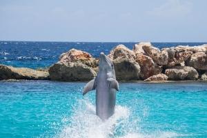dolphin-906181__340.jpg