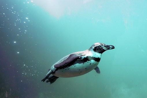 penguin-1196947__340.jpg