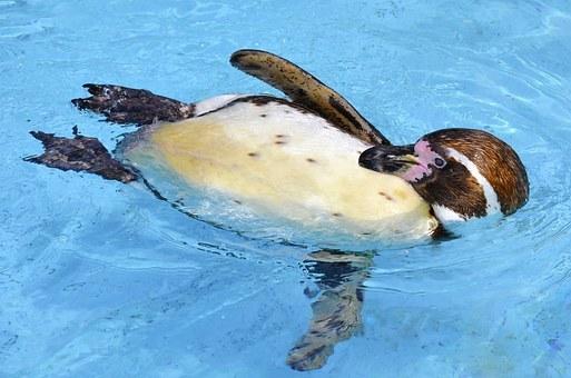 penguin-1385647__340.jpg