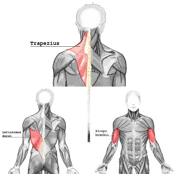 pullmuscle_201705240531198f8.png