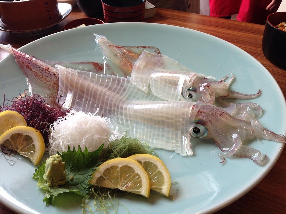 squid-262755_960_720.jpg
